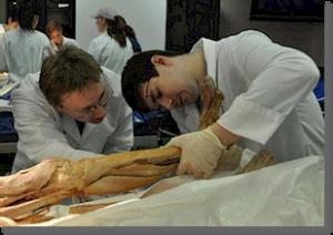 Laboratoire d'anatomie